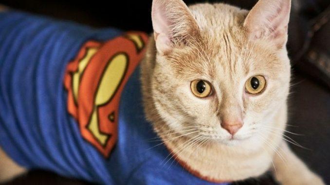 nom de chat super héro