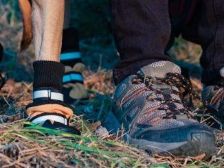Chien Portant Des Chaussures Ou Des Bottes
