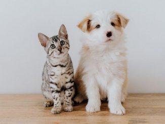comment convaincre mes parents d'adopter un animal de compagnie chiens et chats