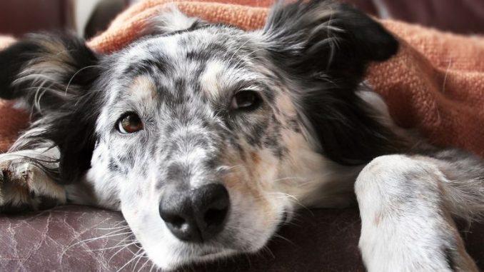 comment gerer les symptomes des crises d'epilepsie chez le chien