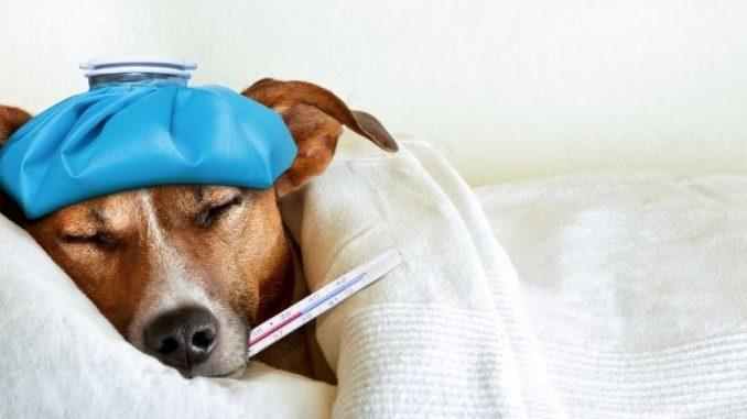 prendre soin de son chien malade et reconnaitre les symptomes