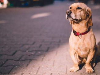 quelles sont les etapes a suivre pour retrouver votre chien perdu