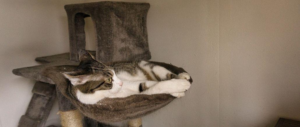pourquoi acheter un arbre à chat