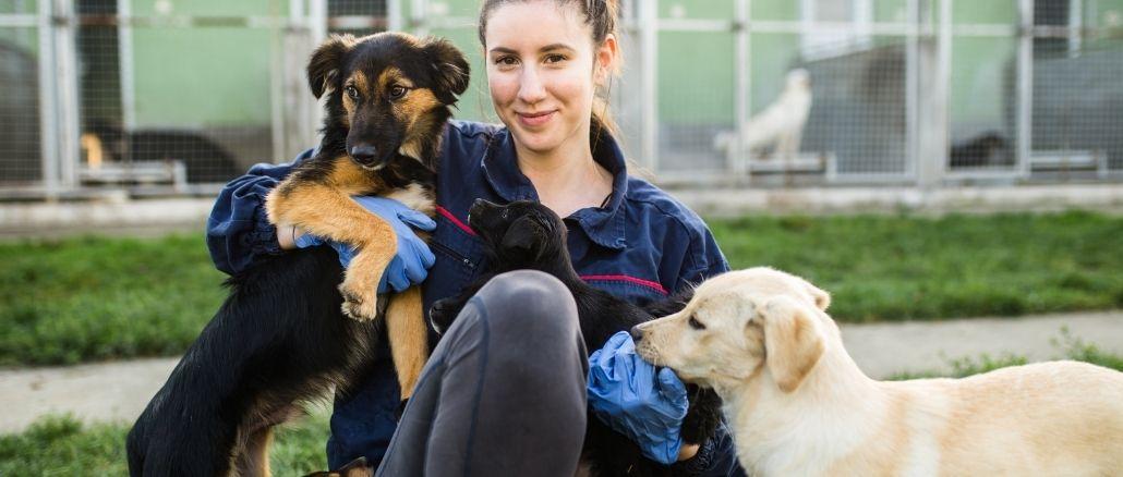 les raisons d'adopter un animal à la spa